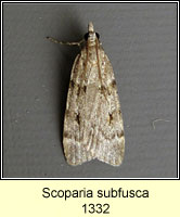 Scoparia subfusca