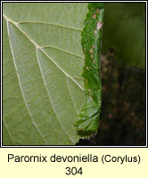 Parornix devoniella (leaf mine)