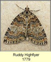 Ruddy Highflyer, Hydriomena ruberata