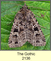 The Gothic, Naenia typica